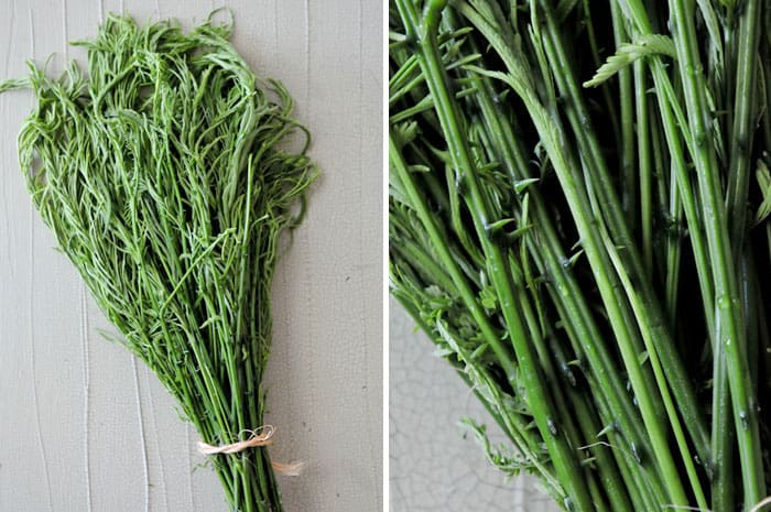 cha-om vegetable, also known as climbing wattle