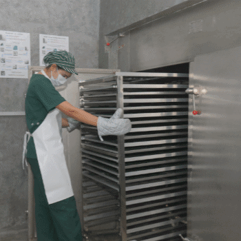 spirulina going into the dehydrator