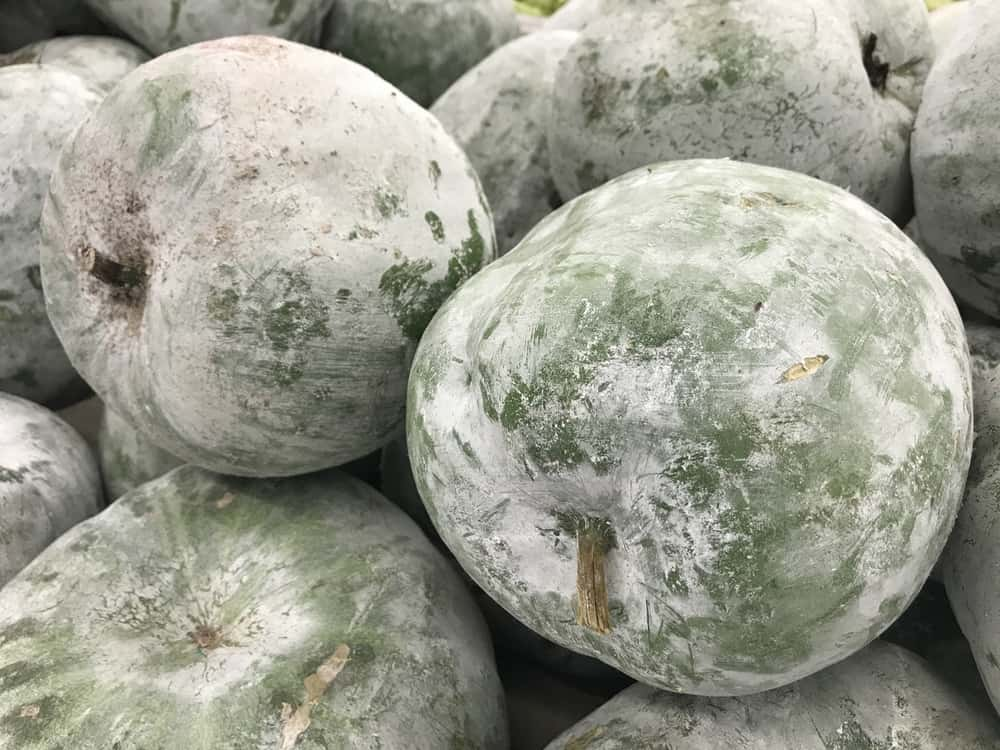 wax-gourd-after-harvesting-covered-in-natural-wax
