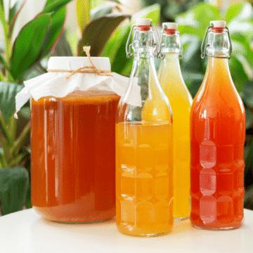 kombucha-tea-in-glass-bottles